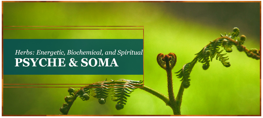 Energetic, Biochemical, and Spiritual Realities of Herbs